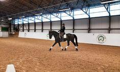 Ryttarens inverkan kan både dölja och skapa hälta hos häst