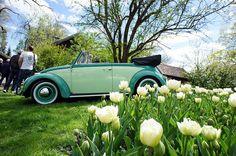 Vw Beetles, Custom Cars, Norway, Convertible, Antique Cars, Pastel, Vroom Vroom, World, Green