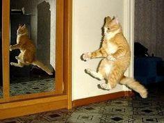 FUNNY VIDEOS: Funny Cats Funny Cat Videos Funny Animals Fail Compilation Kitten Fails