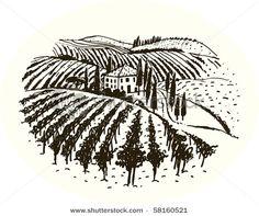 a vineyard sketch
