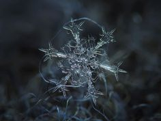 Extreme close ups of snowflakes.  Photographer Uses Cheap Home-Made Camera Rig To Take Stunning Close-Ups of Snowflakes | Bored Panda