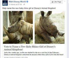 Vote to name baby rhino   Kiama Independent-Lake Times