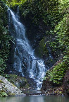 Lamington National Park, Queensland, Australia; photo by Cat