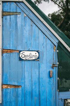 Blue Garden, Garden Pots, Garden Ideas, Glass Garden, Indoor Garden, Blueberry Farm, Country Blue, Country Farmhouse, Country Charm