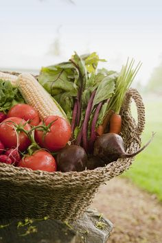Fresh Vegetables in a Basket Photograph  - Fresh Vegetables in a Basket Fine Art Print
