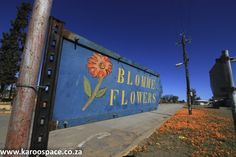 Visiting the Namaqualand daisies on day drives from Calvinia, Northern Cape is the springtime thing to do. Daisies, West Coast, Spring Time, South Africa, Cape, Things To Do, Adventure, Nature, Mantle