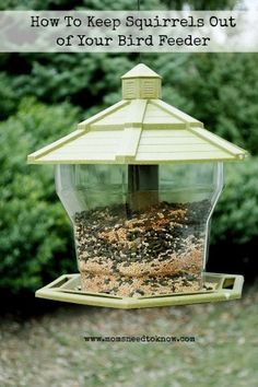 How To Keep Squirrels Out Of Your Bird Feeders Bird feeders The