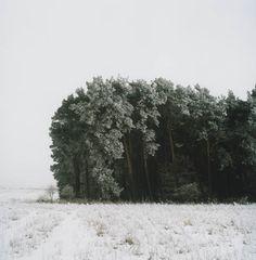 Noch ein Winterwald, 2006 / Blindschleiche  und Riesenblatt (4) / 32   - All rights reserved. Copyright: Anne Schwalbe