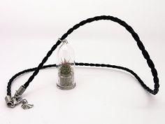 Palms  Live Cacti Plant Necklace Terrarium Flower Necklace  BooBoo Plant with 17 Black Woven Necklace * Check this awesome product by going to the link at the image.