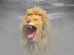 Lion, Animals, Leo, Lions, Animaux, Animal, Animales, Animais