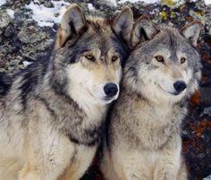 beautiful-wildlife:  Togetherby Haykaz Hakobyan