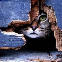 Tiny Treasure - Kitten.