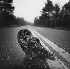 Serious owl by Arthur Tress