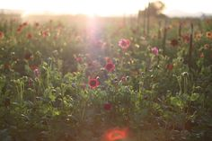 walk with me « Floret Flowers