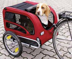 Así los #perros pueden montar en #bicicleta también