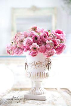 Pink Ranunculus in white urn