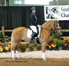 Chestnut Haflinger Mare, Versative and Talented Sport Pony in Texas. DreamHorse.com is the premier horse classifieds site with horses for sale, lease, adoption, and auction, breeding stallions, and more.