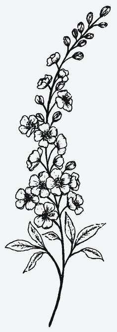 Larkspur Flower Tattoos, Flower Vine Tattoos, Birth Flower Tattoos, Flower Bouquet Tattoo, Cute Tattoos, Black Tattoos, Small Tattoos, Delphinium Tattoo, Permanent Tattoo