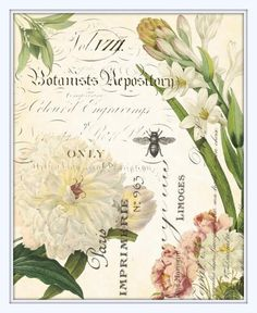Spring Study Plate 2 - Giclee Canvas Art PrintThis print features beautiful antique French botanicals intertwined with French script from antique bookplates and