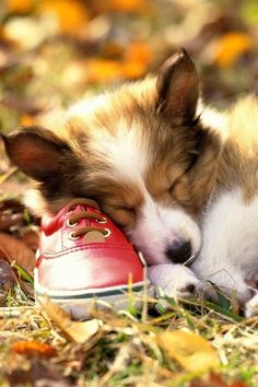 nap on a red shoe