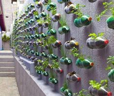 If you are thinking of a nice, sustainable way of recycling plastic bottles, you could get your inspiration from this big vertical garden made using recycled soda bottles. Created as… Reuse Plastic Bottles, Recycled Bottles, Plastic Containers, Plastic Planters, Plastic Recycling, Water Bottle Recycling, Plastic Terrarium, Plastic Jugs, Spice Containers