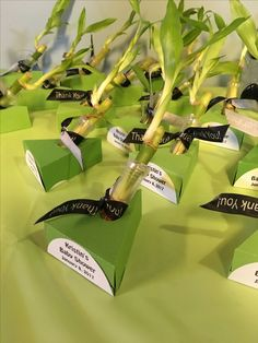 Decor: Baby Shower Panda Theme green, black, bamboo stalk favors 2 of 2. Used cutter to make boxes. Floral tubes with a bit of water.