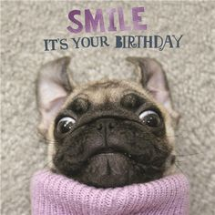 18 best Ideas birthday wishes funny for her dogs Happy Birthday Pug, Happy Birthday Animals, Happy Birthday Greetings Friends, Birthday Congratulations, Happy Birthday Wishes Cards, Cute Birthday Cards, Happy Birthday Pictures, Happy Birthday Quotes, Birthday Greeting Cards