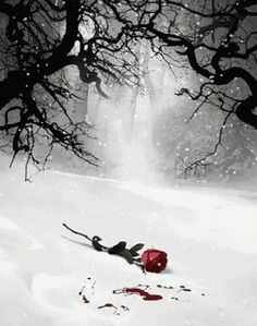 The most beautiful landscape photos animated Flowers Gif, Beautiful Rose Flowers, Beautiful Gif, Flower Phone Wallpaper, Flower Wallpaper, Dark Photography, Amazing Photography, Witchy Wallpaper, Beau Gif
