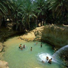 Oasis... Tozeur ... Tunisia