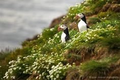 Puffin McMuffin by Brian Donovan on 500px