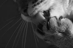 Fotografie: Coole Katzen in Schwarz-Weiß | KlonBlog