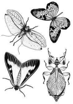 Bug Tattoo, Insect Art, Hand Art, Mini Tattoos, Linocut Prints, Tattoo Sketches, Art Sketchbook, Tattoo Inspiration, Art Inspo