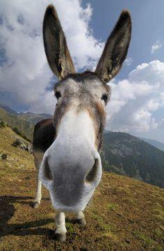 Grote neus