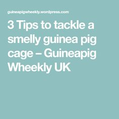 3 Tips to tackle a smelly guinea pig cage – Guineapig Wheekly UK