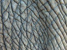 Elephant skin - Thorntree Lodge | Flickr - Photo Sharing!