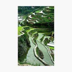 Volcano World, Rice Terraces, Framed Prints, Canvas Prints, The Incredibles, Explore, Artist, Metal, Photo Canvas Prints