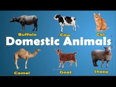 Learn Domestic Animals Video for Kids