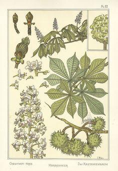 """illustration française : Eugène Grasset, """"La Plante et ses applications ornementales"""", marronnier, pochoir, 1896, p. 52, arbres"""