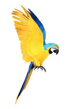 Diana Beltran Herrera — Blue and yellow macaw, 2016.
