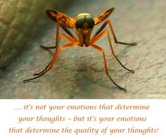 ... it´s not your #emotions that determine your thoughts ~ but it´s your emotions that determine the quality of your thoughts!