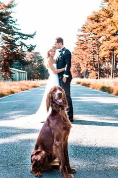 Wedding picture with our dog :)