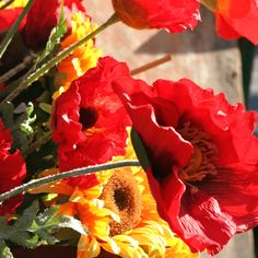 plant poppies and sunflowers