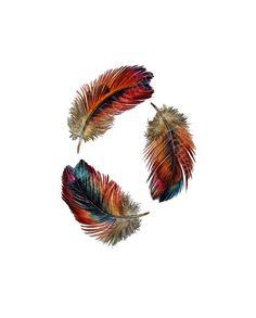 Tres plumas - estudio acuarela de plumas del arco iris