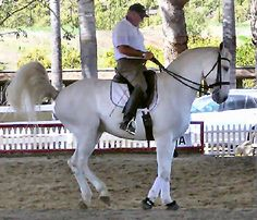 Lusitano, the horse of Portugal...