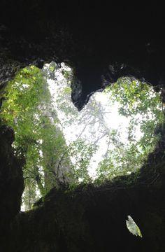 屋久島のウィルソン株。角度によってWハートにみえます♪ #his_green