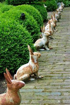Garden rabbits. #rabbit
