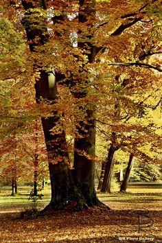 English Garden - Munich, Bavaria