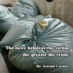They are thrown in bags and suffocated because they aren't needed for the eggs and meat industry.#vegan