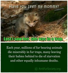 This is so sad we are still trapping animsls. They are so inhumane