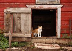 Barn cat, or cats. To keep the horses company.